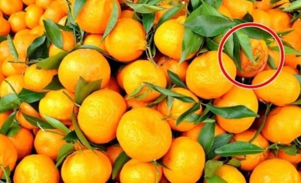 Ответ на тест-загадку про цветок и мандарины